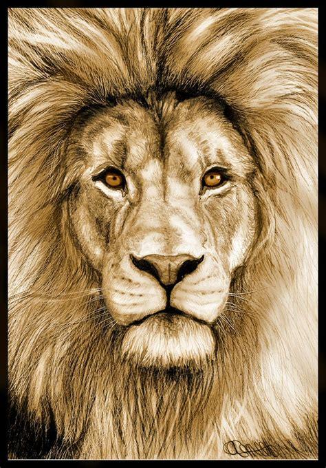 lion color drawing fineart pinterest google images