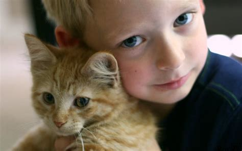 Adorable Kid Attempts To Organize His  Kittens Goes Viral