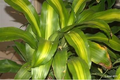 Tropical Plants Names Plant Indoor Outdoor Garden