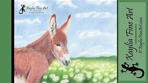 Speed Drawing  How To Draw A Donkey Foal In Coloured