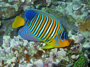 welcome: Beautiful Fish Wallpapers