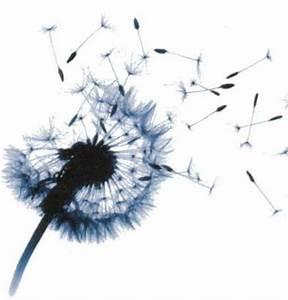 Bild Pusteblume Schwarz Weiß : k nnte alles sch n sein pusteblume ~ Bigdaddyawards.com Haus und Dekorationen