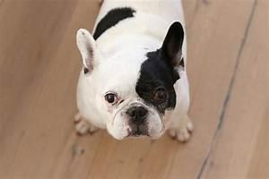 Laisser Un Chien Seul Quand On Travaille : ma vie avec un chien mango and salt ~ Medecine-chirurgie-esthetiques.com Avis de Voitures