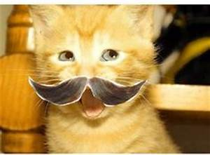 1000+ images about Cats with Mustaches on Pinterest ...