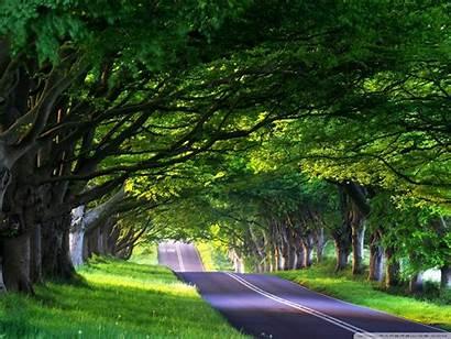 Lined Tree Street