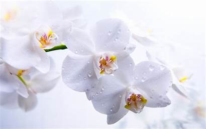 Flower Orchid Orchids Flowers Wallpapers Inspirationseek