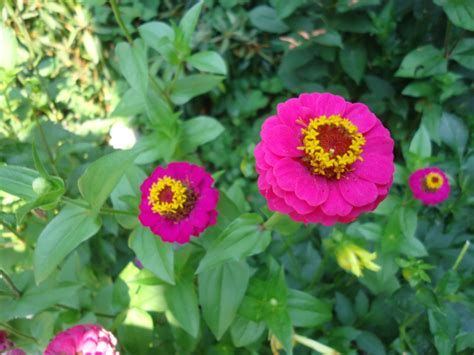 flowers to plant in april what flowers can i plant in april that bloomin garden