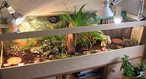 Pflanzen Terrarium Einrichten : seite mit vielen tipps f r indoor schildkr ten terrarien schildkr ten landschildkr ten ~ Watch28wear.com Haus und Dekorationen