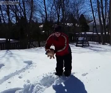puppy  thrown  deep snow  funny gifs updated
