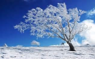 beautiful background winter snow tree hd wallpaper wallpapers13