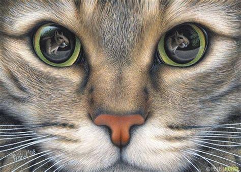 cat pencil drawing drawings pinterest enemies cat