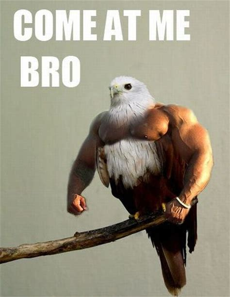 i have seen the whole of the internet come at me bro bird