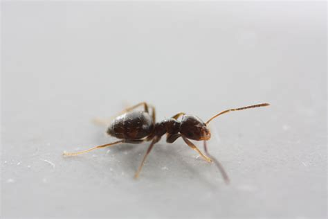 small ants ctho s galleries small ants