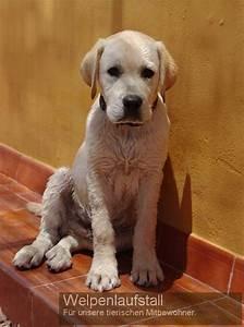 Hunde Sachen Kaufen : welpenlaufstall hundebabys und kleine hunde sicher spielen lassen n tzliche sachen f r den hund ~ Watch28wear.com Haus und Dekorationen