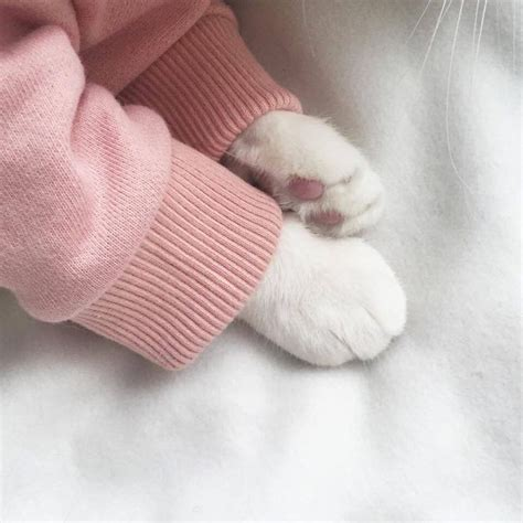 untitled amazing amazing untitled wallpapers cat paws