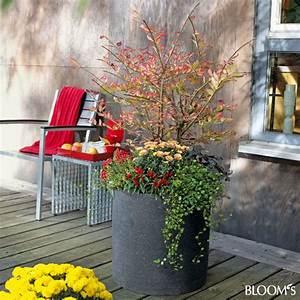 bloom39s album With garten planen mit obstbaum im topf balkon