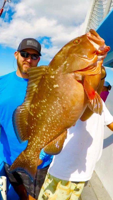 grouper fat deep sea stuart