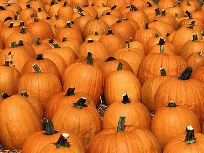 Pumpkin Wallpapers Patch Pumpkins Desktop Party Backgrounds