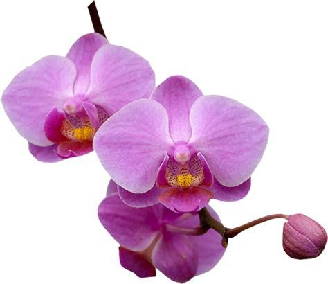 pot a orchidee transparent 28 images lylou collection une histoire d orchid 233 es set