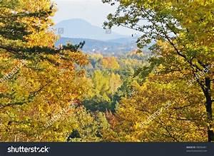 Autumn Colours Bursting Through Leaves Creating A Vibrant ...