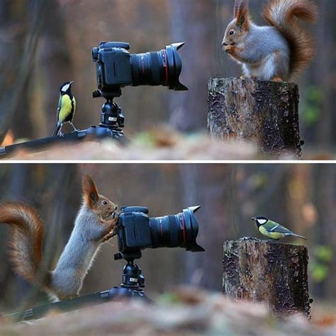 wildlife photography idea  vadimtrunov
