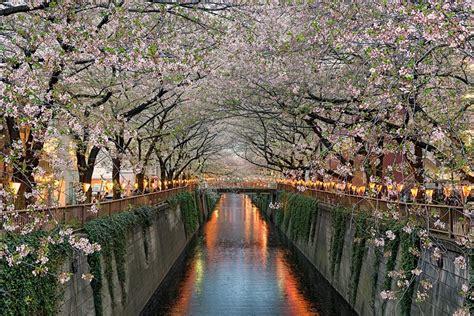 japan dream photo   elia locardi