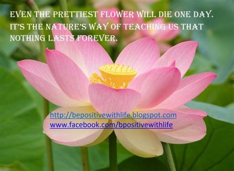 beautiful flower quotes  life  positive  life