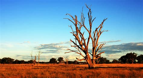 Five Tips for Surviving the Outback in Australia ...