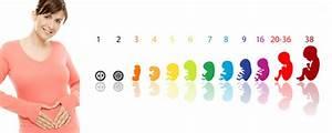 Schwangerschaft 10 Monate : schwangerschaft verlauf bildanalyse biorhythmuskalender ~ Articles-book.com Haus und Dekorationen