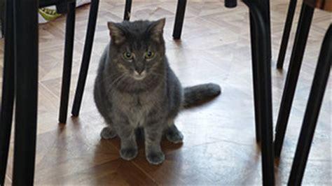 odeur de pipi de chat sur canape urine de chat sur un canap 233 terre de sommi 232 res et vinaigre blanc consommer durable