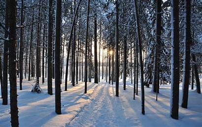 Forest Winter Trees Nature Landscape Road Wallpapers