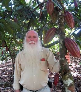 Dna Of Cocoa Bean Tree Sequenced By Mars And Hershey