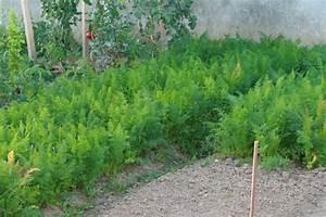 Quand Planter Lavande Dans Jardin : quand planter carotte ~ Dode.kayakingforconservation.com Idées de Décoration