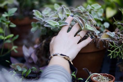 images hand tree branch blur plant leaf ring