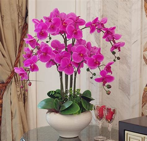 orchid phalaenopsis real touch flower  leaves