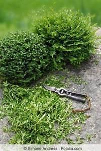 Bonsai Stecklinge Machen : die besten 25 bonsai pflege ideen auf pinterest pflanzen umtopfen pflanzen vermehrung und ~ Indierocktalk.com Haus und Dekorationen