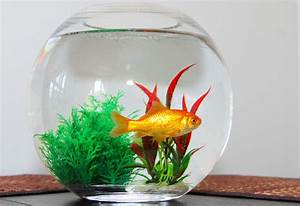 How to Clean a Goldfish Bowl | eBay