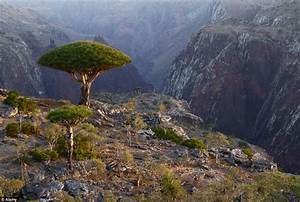 Filmmaker uncovers Socotra - the exotic 'lost world ...