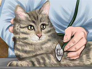 Spirulina For Cats With Kidney Disease