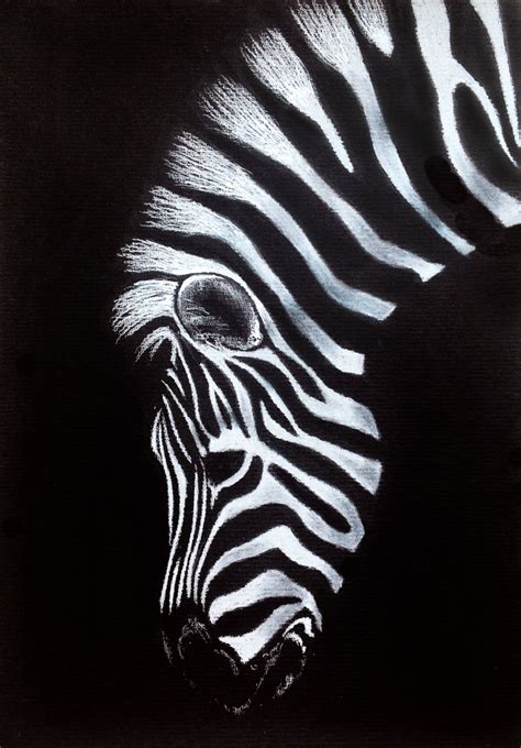 zebra drawing  black paper art board black