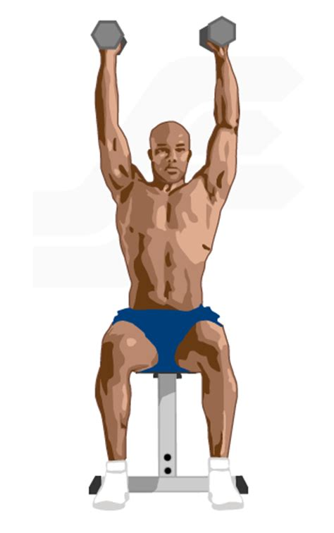 Bench Push by Dumbbell Shoulder Press Exercise Guide Weight Training