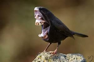 Hilariously Strange Manipulated Photos of Birds With Big ...