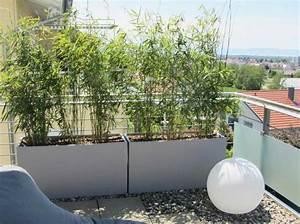 bambus als sichtschutz fur terasse und balkon bambus und With whirlpool garten mit balkon sichtschutz gras