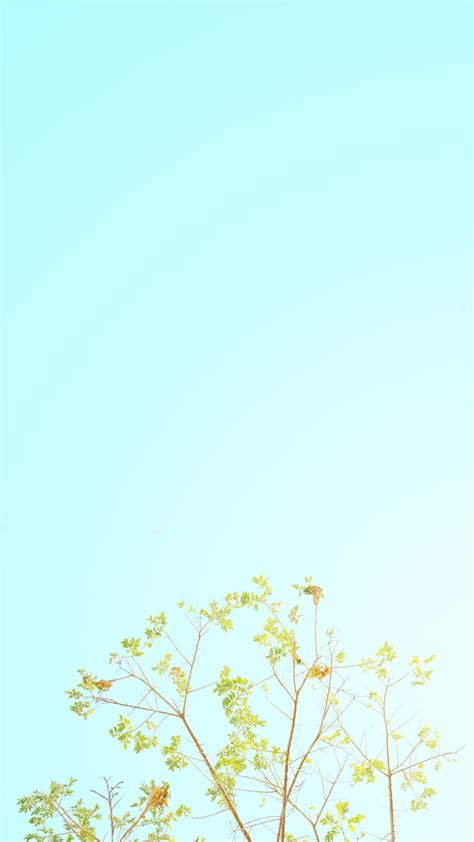 minimalist spring wallpaper hd   pixelstalknet