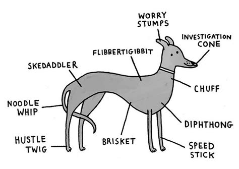 1000+ Images About Greyhound Memes And Funny Greyhound