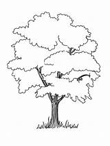 Tree Coloring Trees Pages Elm Oak Drawing Baobab Printable Deciduous Fruit Section Designlooter Getdrawings Nature 41kb 1000px Drawings Coniferous Contains sketch template