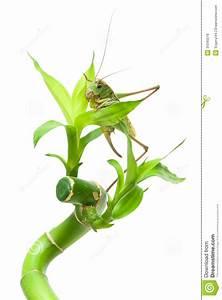Grande Plante Verte : grande sauterelle se reposant sur une plante verte sur un ~ Premium-room.com Idées de Décoration