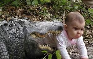 Alligator Bites Baby - Picture | eBaum's World