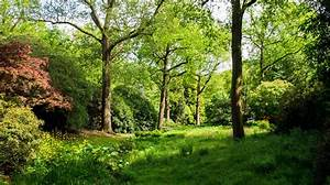 50 million trees to be planted to create a Northern Forest ...