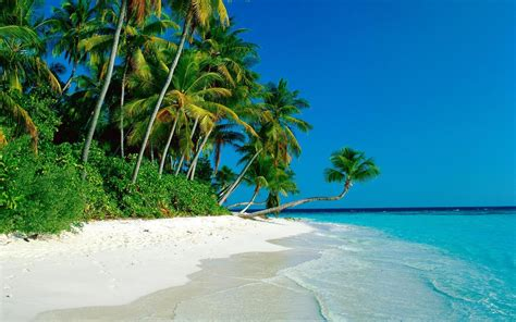 tropical island beach wallpaper 1920x1200 32297